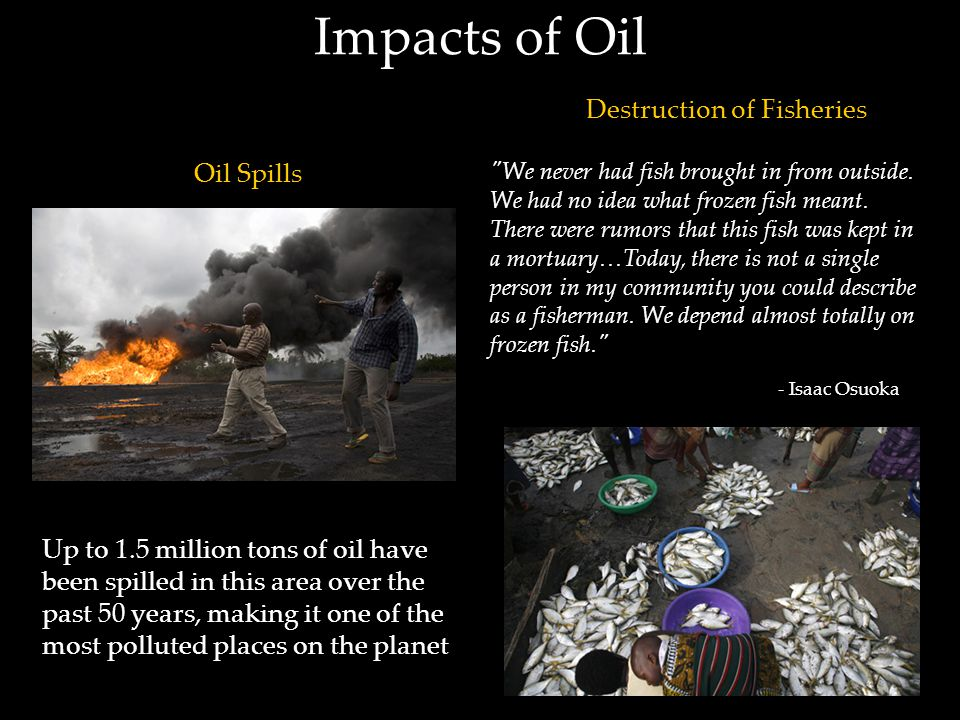 Impacts of Oil Oil Spills Destruction of Fisheries Up to 1.5 million tons of oil have been spilled in this area over the past 50 years, making it one of the most polluted places on the planet We never had fish brought in from outside.