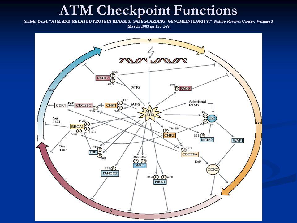Repair McKinnon, Peter J. ATM and Ataxia telangiectasia. Embo Reports. Vol 3 (8) 2004. pg 772-776