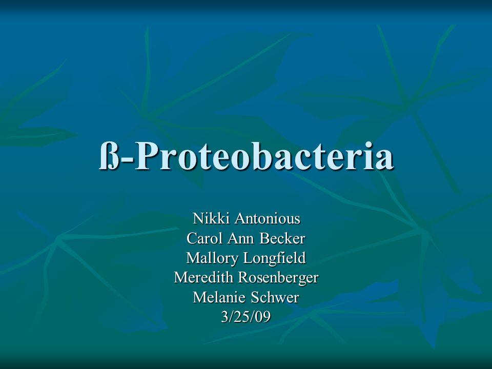 ß-Proteobacteria Nikki Antonious Carol Ann Becker Mallory Longfield Meredith Rosenberger Melanie Schwer 3/25/09