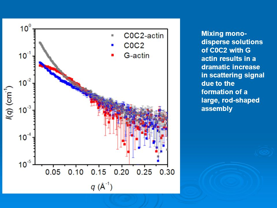 Mixing mono- disperse solutions of C0C2 with G actin results in a dramatic increase in scattering signal due to the formation of a large, rod-shaped assembly