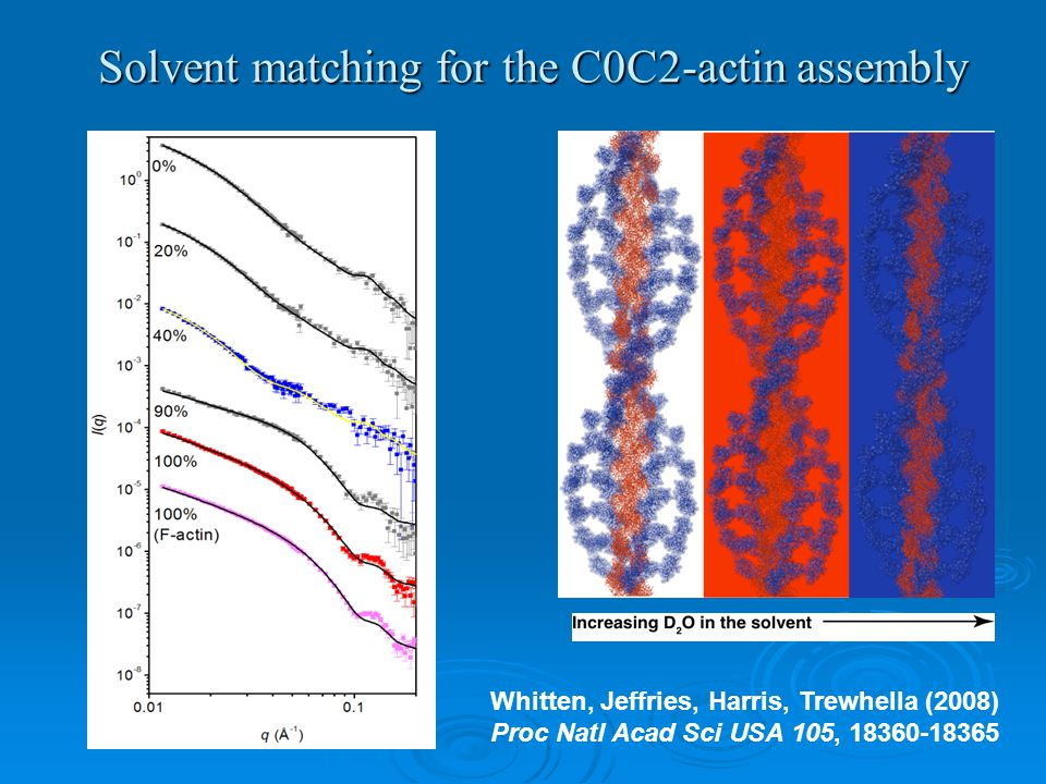Solvent matching for the C0C2-actin assembly Whitten, Jeffries, Harris, Trewhella (2008) Proc Natl Acad Sci USA 105, 18360-18365