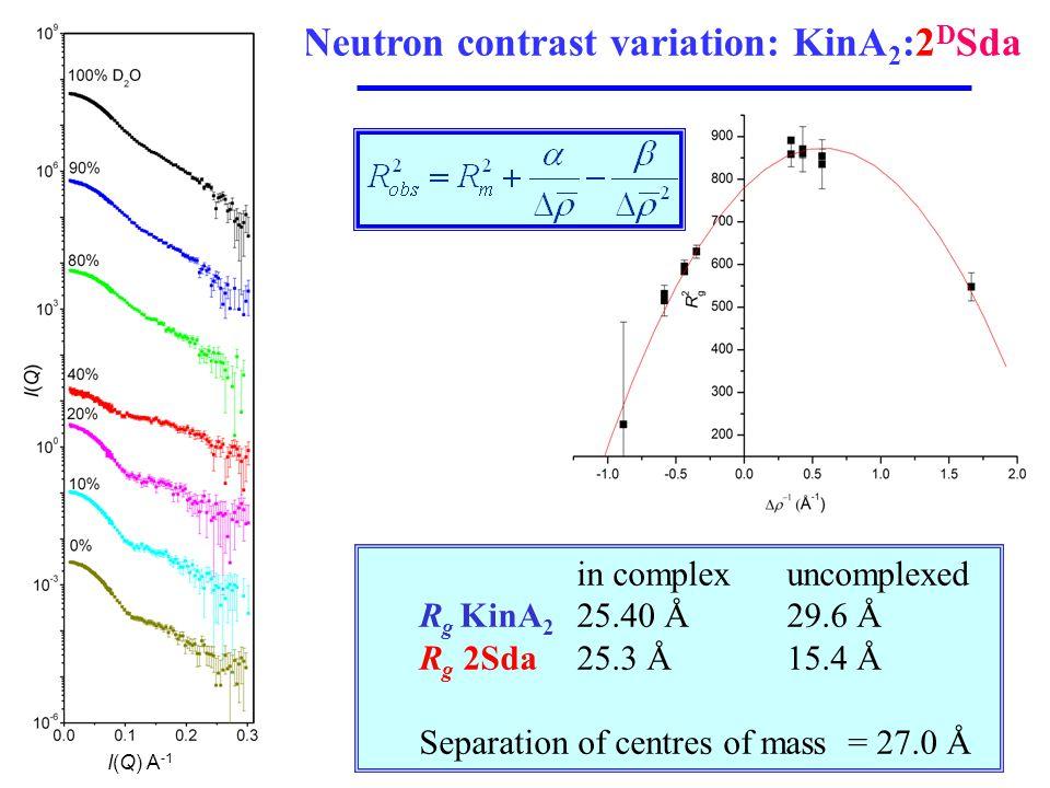 Neutron contrast variation: KinA 2 :2 D Sda in complexuncomplexed R g KinA 2 25.40 Å29.6 Å R g 2Sda 25.3 Å15.4 Å Separation of centres of mass = 27.0 Å I(Q) A -1