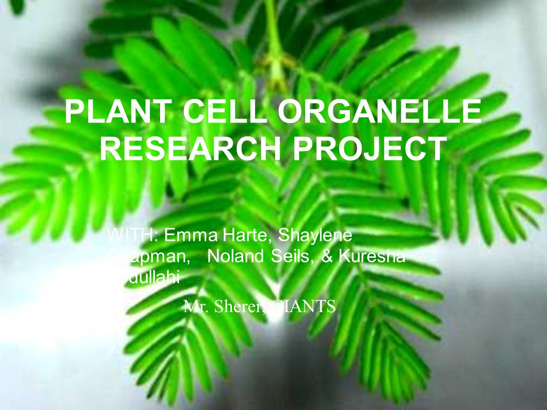 PLANT CELL ORGANELLE RESEARCH PROJECT Mr. Sherer, GIANTS WITH: Emma Harte, Shaylene Chapman, Noland Seils, & Kuresha Abdullahi