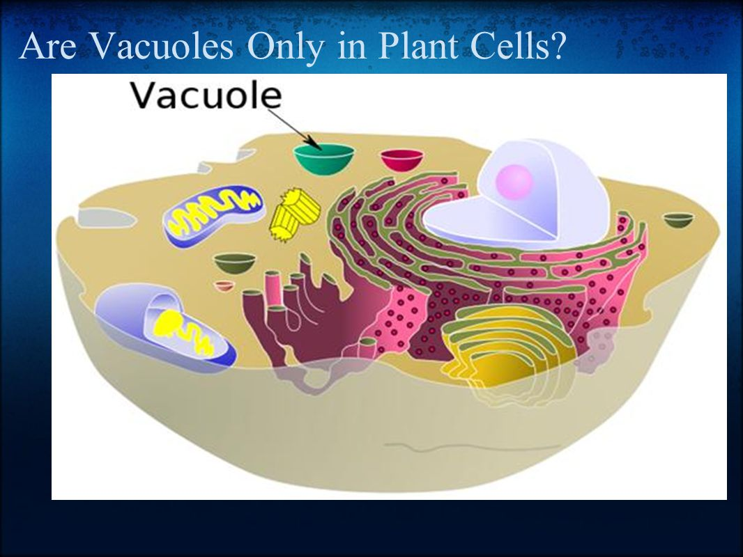 Are Vacuoles Only in Plant Cells?