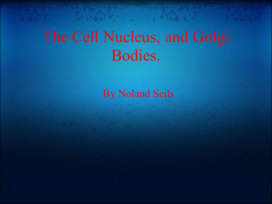 The Cell Nucleus, and Golgi Bodies. By Noland Seils