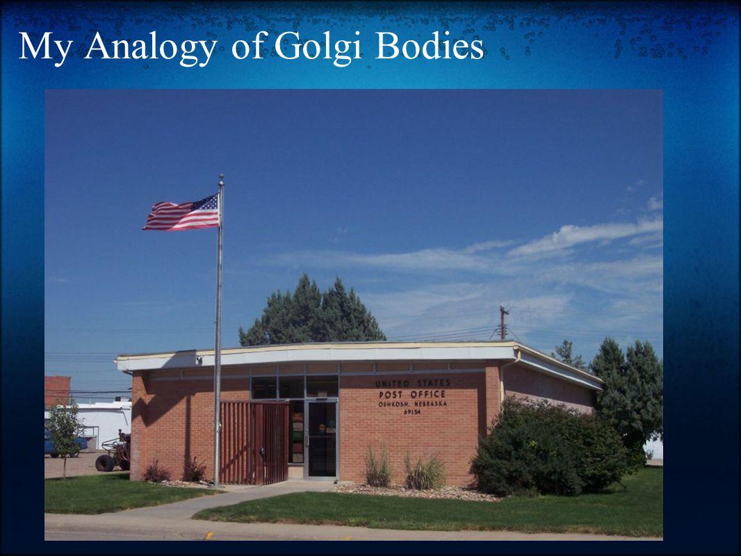 My Analogy of Golgi Bodies