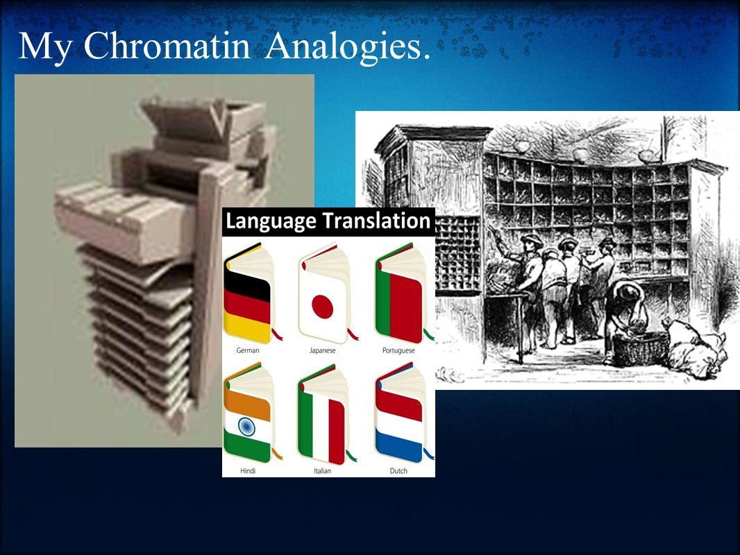 My Chromatin Analogies.