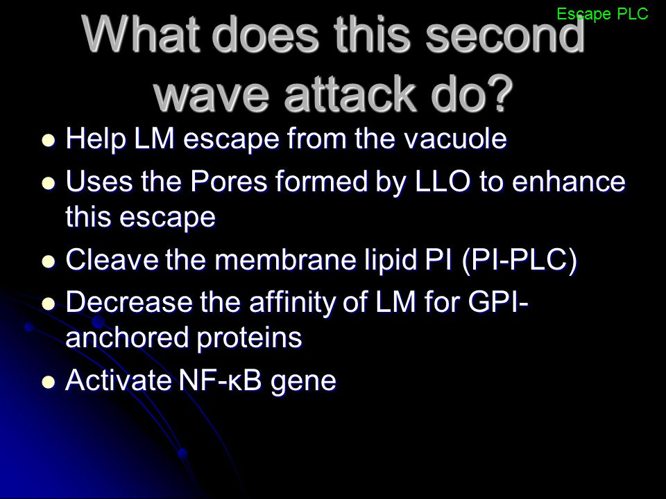 What does this second wave attack do? Help LM escape from the vacuole Help LM escape from the vacuole Uses the Pores formed by LLO to enhance this esc