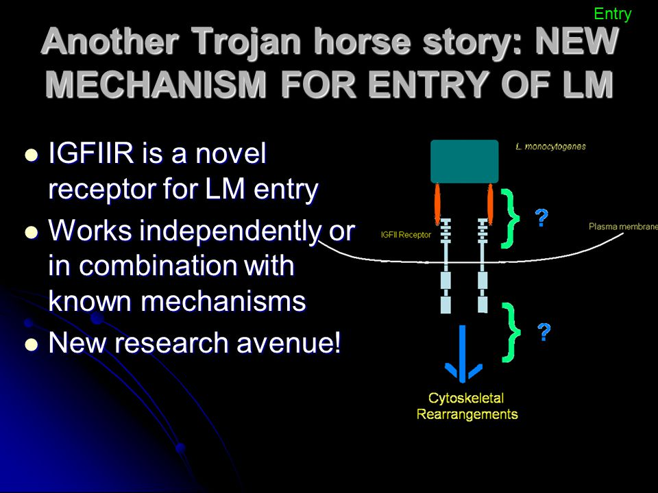 Another Trojan horse story: NEW MECHANISM FOR ENTRY OF LM IGFIIR is a novel receptor for LM entry IGFIIR is a novel receptor for LM entry Works indepe