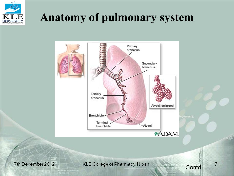 Contd.. 7th December 201271KLE College of Pharmacy, Nipani. Anatomy of pulmonary system