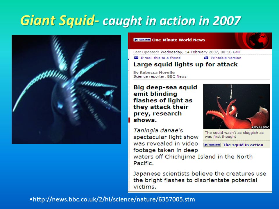 Giant Squid- caught in action in 2007 http://news.bbc.co.uk/2/hi/science/nature/6357005.stm