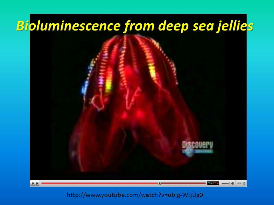 Bioluminescence from deep sea jellies http://www.youtube.com/watch?v=ubIg-WtjUg0