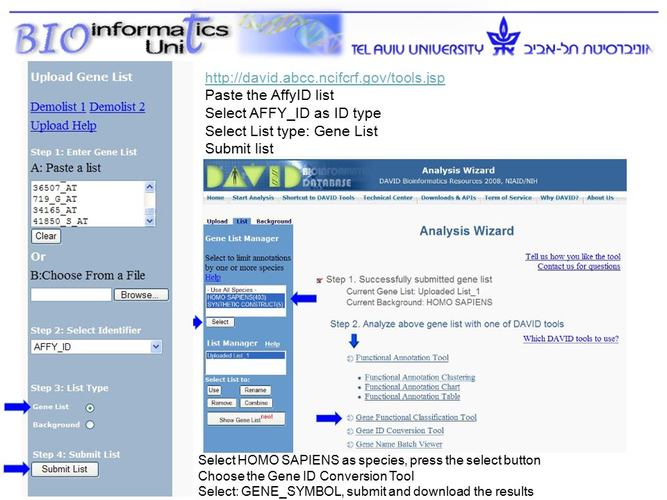 12 http://david.abcc.ncifcrf.gov/tools.jsp Paste the AffyID list Select AFFY_ID as ID type Select List type: Gene List Submit list Select HOMO SAPIENS as species, press the select button Choose the Gene ID Conversion Tool Select: GENE_SYMBOL, submit and download the results