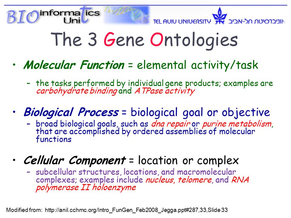 Molecular Function = elemental activity/task –the tasks performed by individual gene products; examples are carbohydrate binding and ATPase activity Biological Process = biological goal or objective –broad biological goals, such as dna repair or purine metabolism, that are accomplished by ordered assemblies of molecular functions Cellular Component = location or complex –subcellular structures, locations, and macromolecular complexes; examples include nucleus, telomere, and RNA polymerase II holoenzyme The 3 Gene Ontologies Modified from: http://anil.cchmc.org/Intro_FunGen_Feb2008_Jegga.ppt#287,33,Slide 33 2