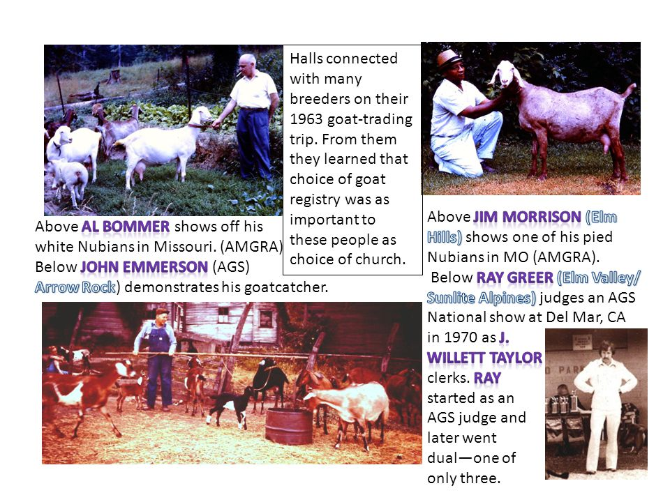 Halls connected with many breeders on their 1963 goat-trading trip. From them they learned that choice of goat registry was as important to these peop
