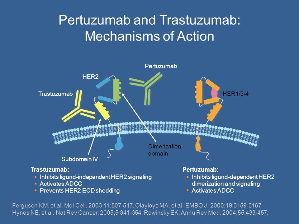 HER1/3/4 Pertuzumab HER2 Trastuzumab Subdomain IV Dimerization domain Trastuzumab:  Inhibits ligand-independent HER2 signaling  Activates ADCC  Pre