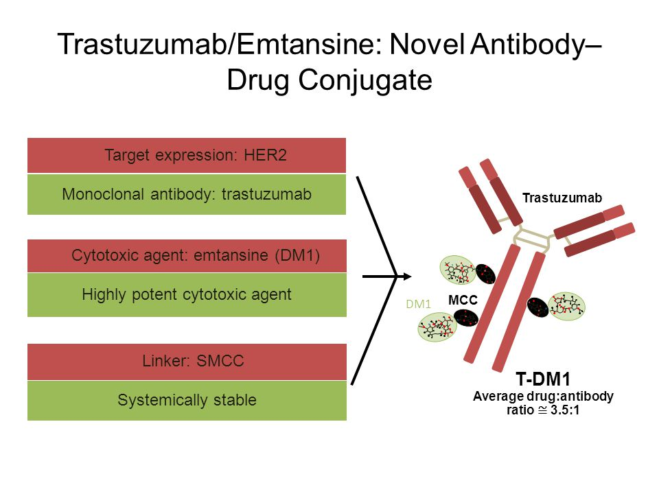 Highly potent cytotoxic agent Cytotoxic agent: emtansine (DM1) Monoclonal antibody: trastuzumab Target expression: HER2 Systemically stable Linker: SM