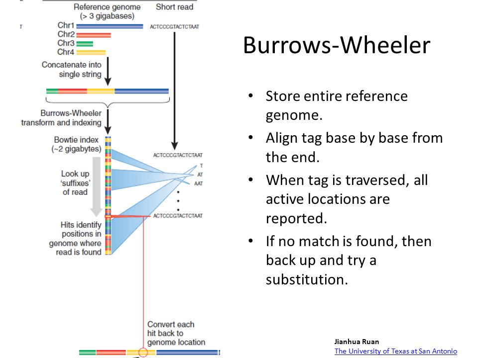 Burrows-Wheeler Store entire reference genome. Align tag base by base from the end.