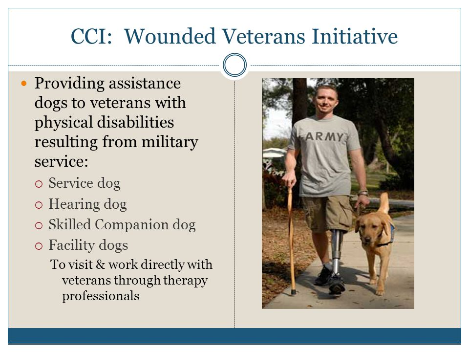 CCI: Wounded Veterans Initiative Providing assistance dogs to veterans with physical disabilities resulting from military service:  Service dog  Hearing dog  Skilled Companion dog  Facility dogs To visit & work directly with veterans through therapy professionals