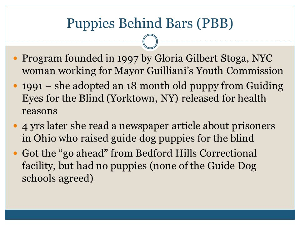 Puppies Behind Bars (PBB) Program founded in 1997 by Gloria Gilbert Stoga, NYC woman working for Mayor Guilliani's Youth Commission 1991 – she adopted an 18 month old puppy from Guiding Eyes for the Blind (Yorktown, NY) released for health reasons 4 yrs later she read a newspaper article about prisoners in Ohio who raised guide dog puppies for the blind Got the go ahead from Bedford Hills Correctional facility, but had no puppies (none of the Guide Dog schools agreed)