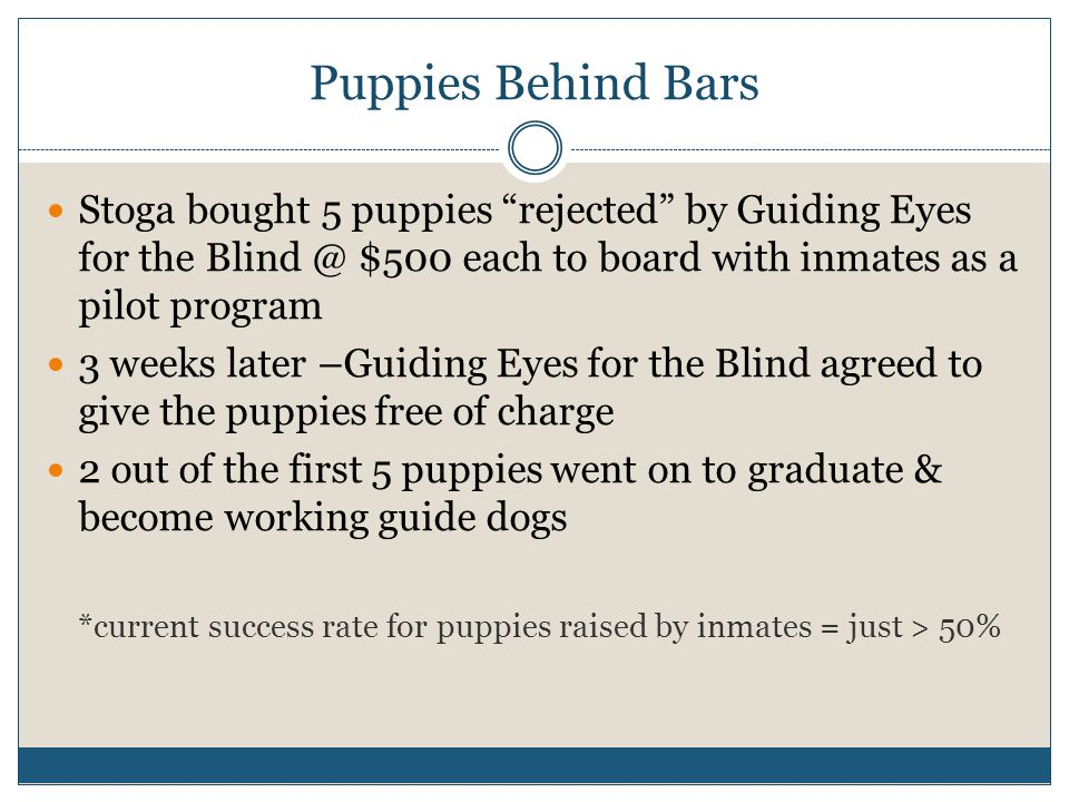 Puppies Behind Bars Stoga bought 5 puppies rejected by Guiding Eyes for the Blind @ $500 each to board with inmates as a pilot program 3 weeks later –Guiding Eyes for the Blind agreed to give the puppies free of charge 2 out of the first 5 puppies went on to graduate & become working guide dogs *current success rate for puppies raised by inmates = just > 50%