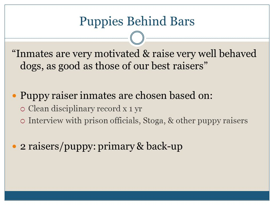 Puppies Behind Bars Inmates are very motivated & raise very well behaved dogs, as good as those of our best raisers Puppy raiser inmates are chosen based on:  Clean disciplinary record x 1 yr  Interview with prison officials, Stoga, & other puppy raisers 2 raisers/puppy: primary & back-up