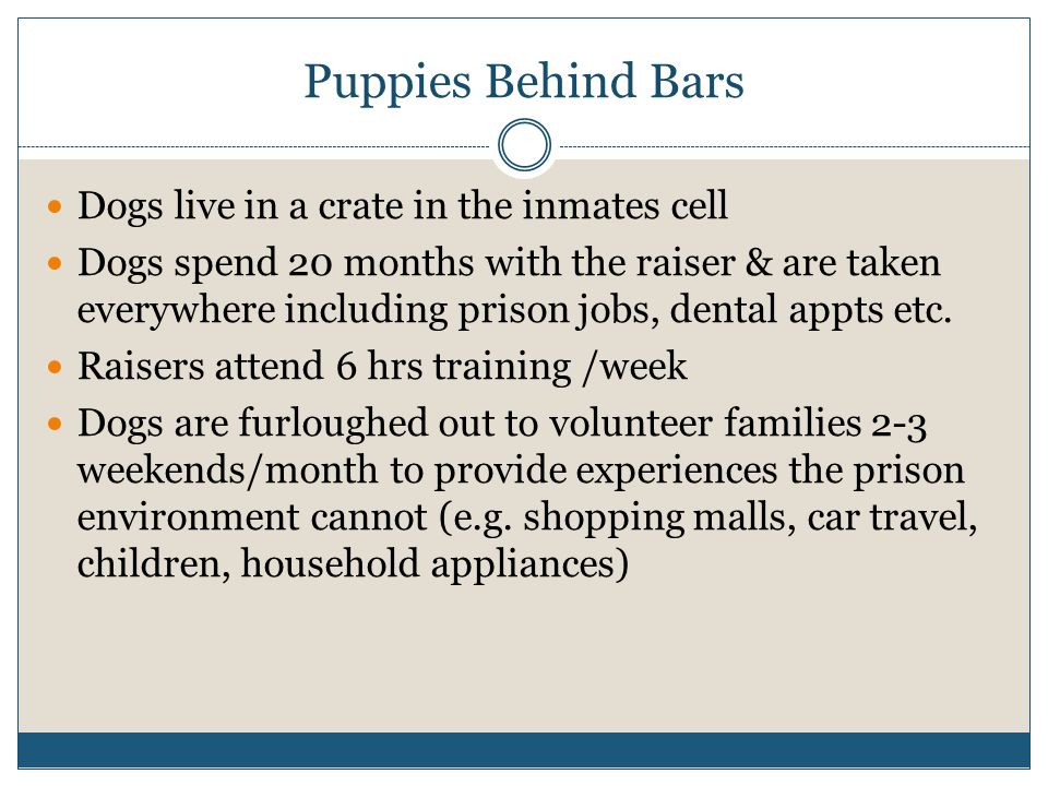 Puppies Behind Bars Dogs live in a crate in the inmates cell Dogs spend 20 months with the raiser & are taken everywhere including prison jobs, dental