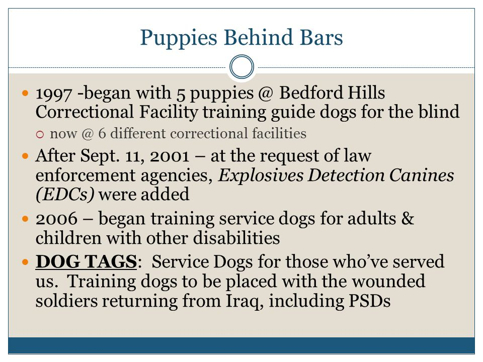 Puppies Behind Bars 1997 -began with 5 puppies @ Bedford Hills Correctional Facility training guide dogs for the blind  now @ 6 different correctiona
