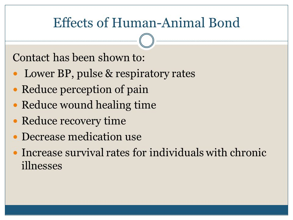 Effects of Human-Animal Bond Contact has been shown to: Lower BP, pulse & respiratory rates Reduce perception of pain Reduce wound healing time Reduce