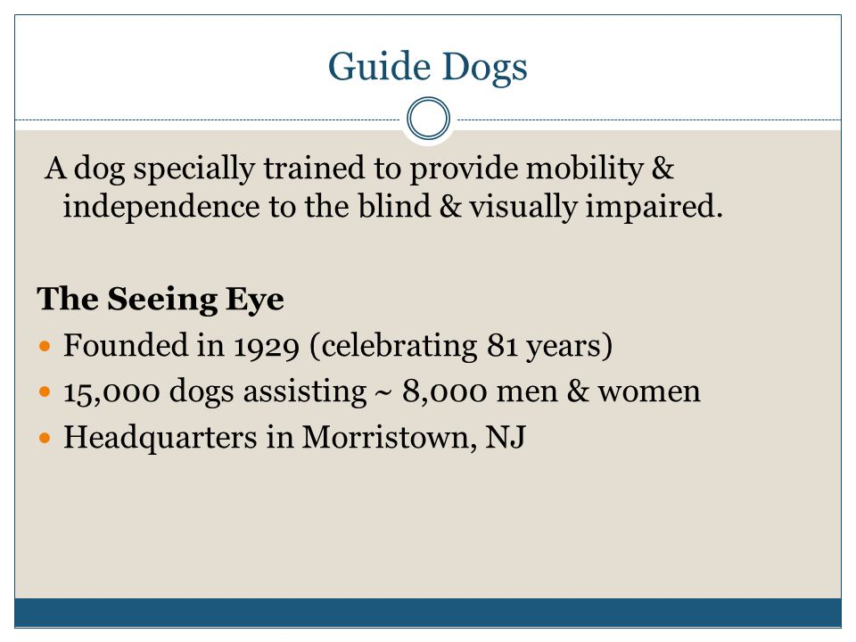 Guide Dogs A dog specially trained to provide mobility & independence to the blind & visually impaired. The Seeing Eye Founded in 1929 (celebrating 81