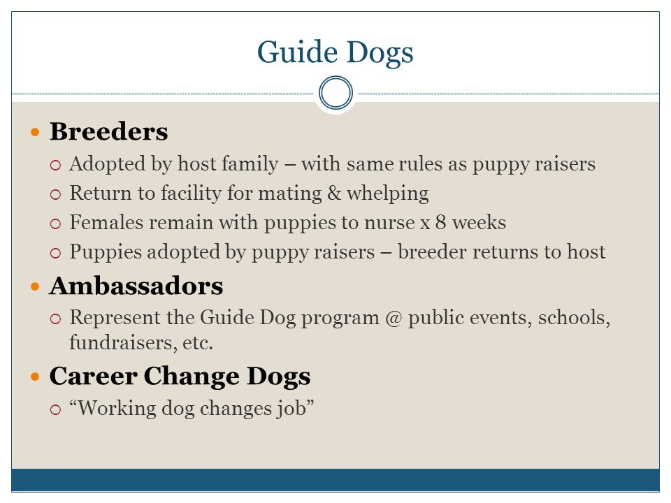 Guide Dogs Breeders  Adopted by host family – with same rules as puppy raisers  Return to facility for mating & whelping  Females remain with puppies to nurse x 8 weeks  Puppies adopted by puppy raisers – breeder returns to host Ambassadors  Represent the Guide Dog program @ public events, schools, fundraisers, etc.