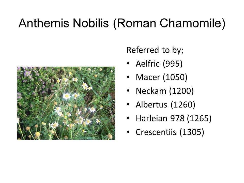 Thymus Vulgaris (Common Thyme) Referred to by; Palladius (380) Hildegard (1150) Neckam (1200) Bartholomew (1240) Albertus (1260) Crescentiis (1305)