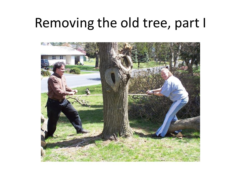 Removing the old tree, part I