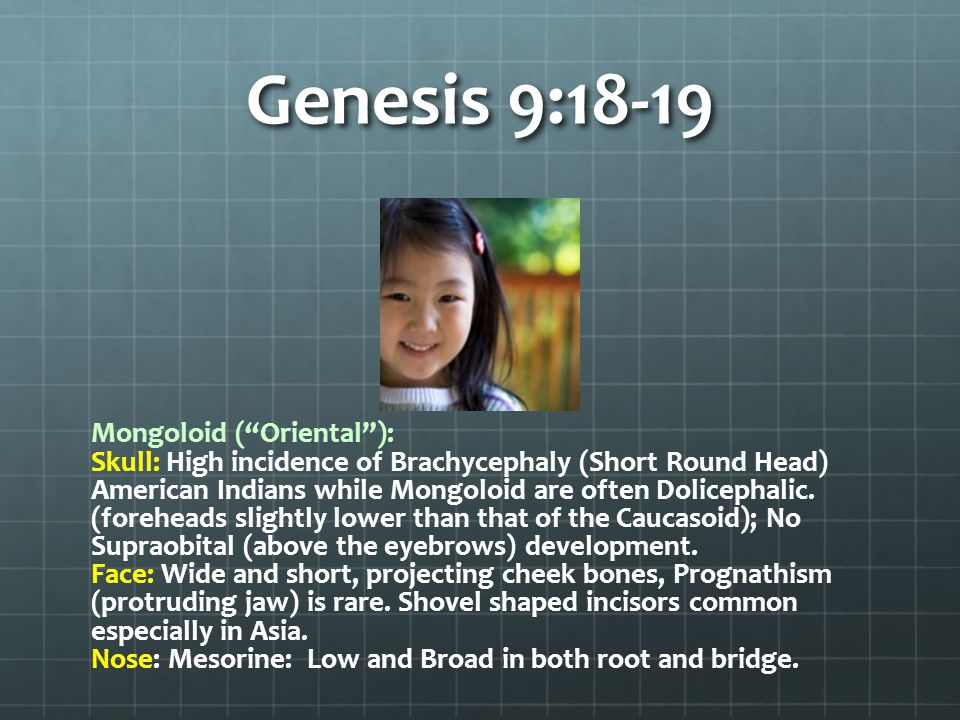 Genesis 9:18-19 Mongoloid ( Oriental ): Skull: High incidence of Brachycephaly (Short Round Head) American Indians while Mongoloid are often Dolicephalic.