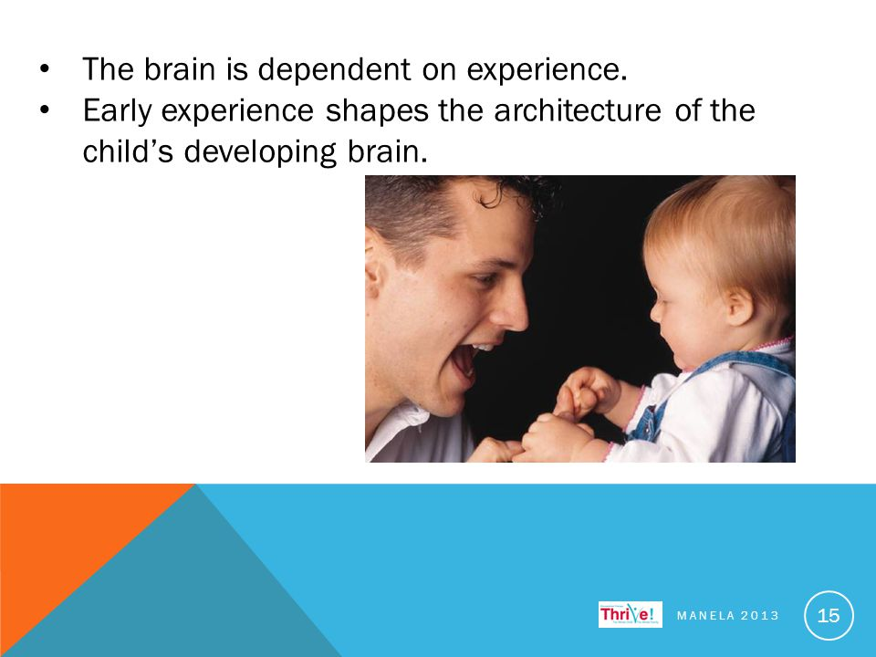 The brain is dependent on experience.