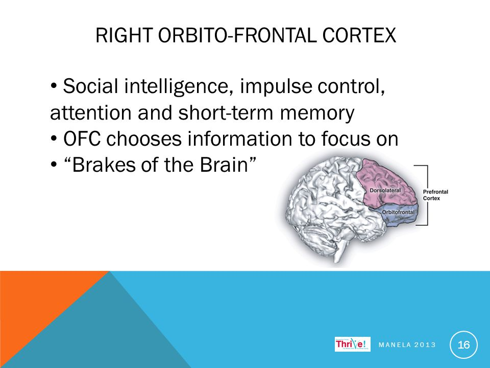 RIGHT ORBITO-FRONTAL CORTEX MANELA 2013 16 Social intelligence, impulse control, attention and short-term memory OFC chooses information to focus on Brakes of the Brain