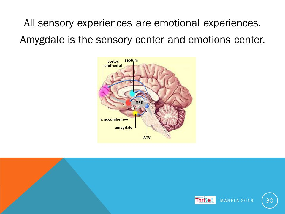 All sensory experiences are emotional experiences.