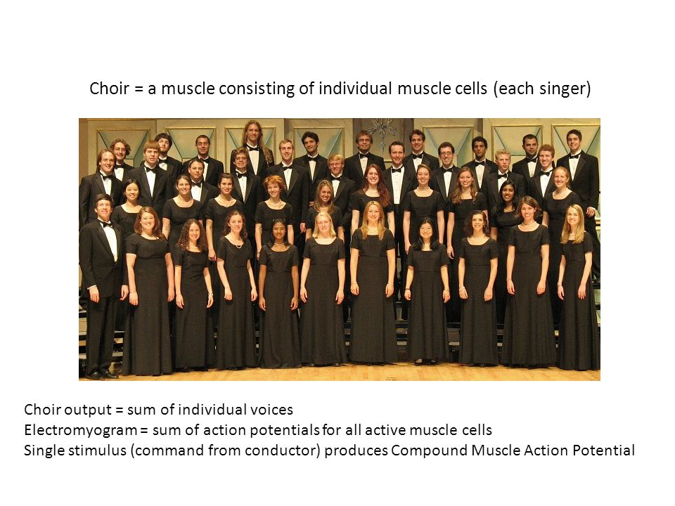 Choir = a muscle consisting of individual muscle cells (each singer) Choir output = sum of individual voices Electromyogram = sum of action potentials for all active muscle cells Single stimulus (command from conductor) produces Compound Muscle Action Potential
