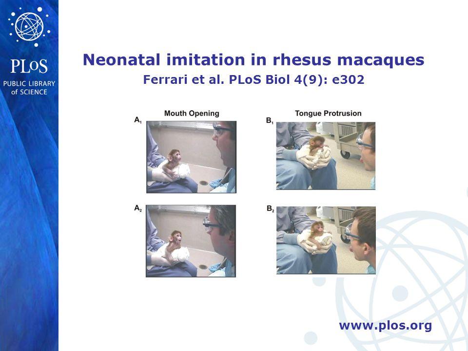 www.plos.org Neonatal imitation in rhesus macaques Ferrari et al. PLoS Biol 4(9): e302