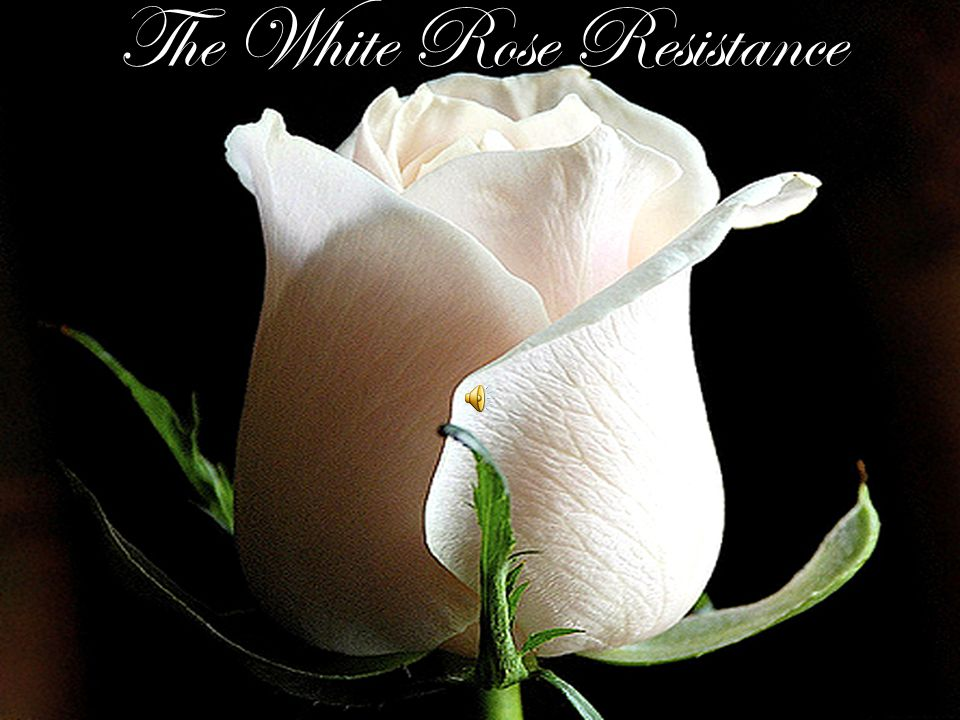 The White Rose Resistance
