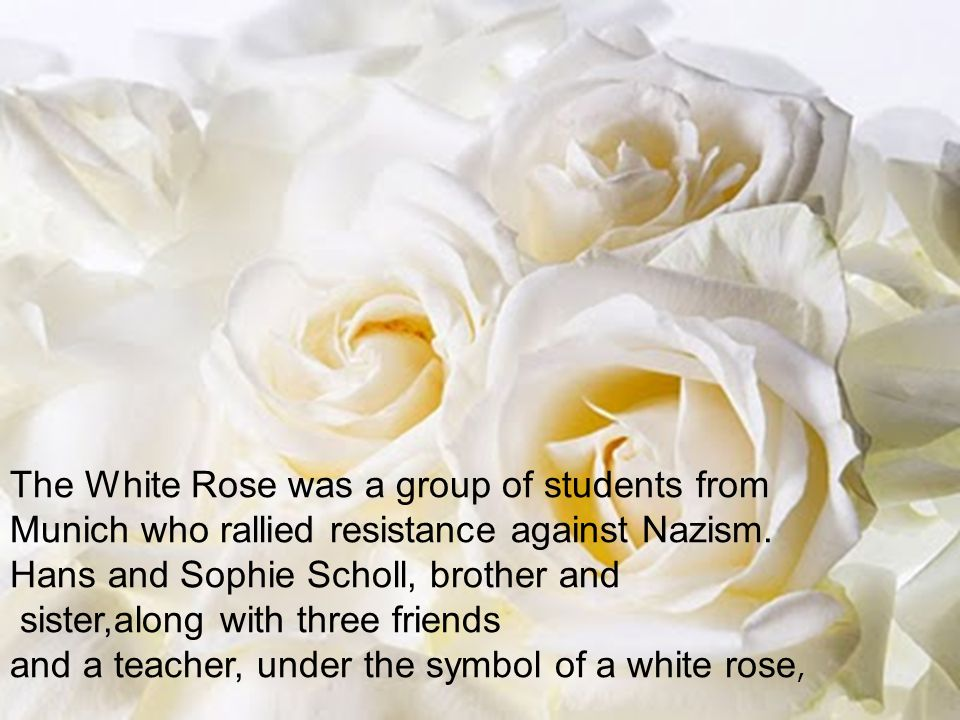 The White Rose was a group of students from Munich who rallied resistance against Nazism. Hans and Sophie Scholl, brother and sister,along with three