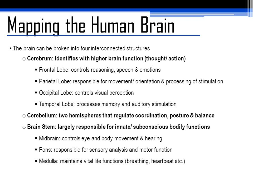 Mapping the Human Brain o The Limbic System: controls memory, behaviour, emotion & olfactory senses  Thalamus: regulates consciousness (sleep/ alertness)  Hypothalamus: links the endocrine system to the brain through the pituitary gland Ex.