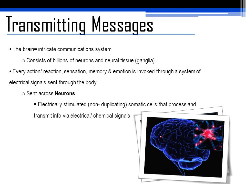 Transmitting Messages The brain= intricate communications system o Consists of billions of neurons and neural tissue (ganglia) Every action/ reaction,