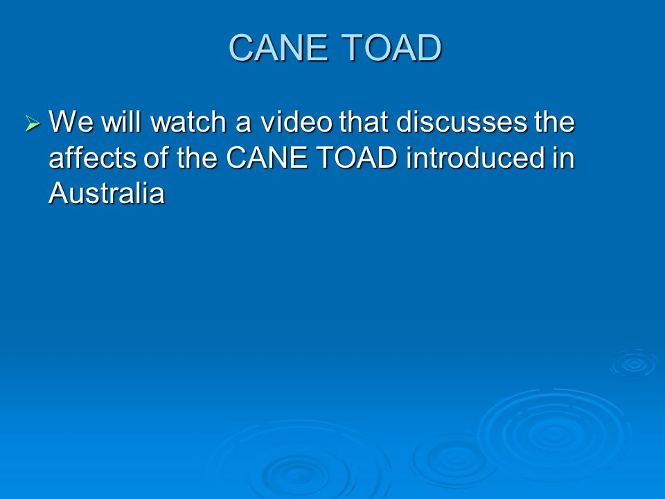CANE TOAD  We will watch a video that discusses the affects of the CANE TOAD introduced in Australia