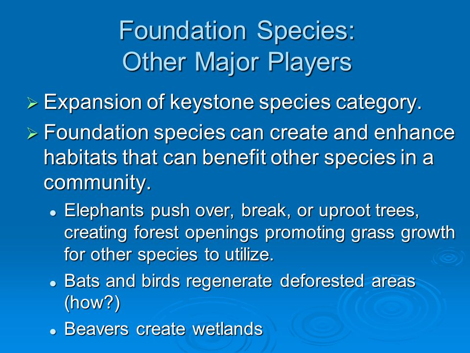 Foundation Species: Other Major Players  Expansion of keystone species category.  Foundation species can create and enhance habitats that can benefi