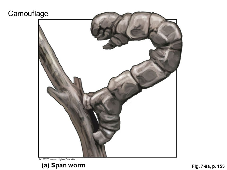 Fig. 7-8a, p. 153 (a) Span worm Camouflage