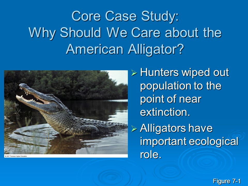 Core Case Study: Why Should We Care about the American Alligator?  Hunters wiped out population to the point of near extinction.  Alligators have im