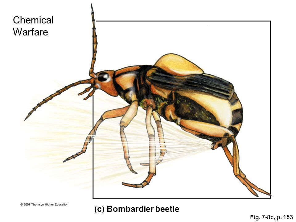 Fig. 7-8c, p. 153 (c) Bombardier beetle Chemical Warfare