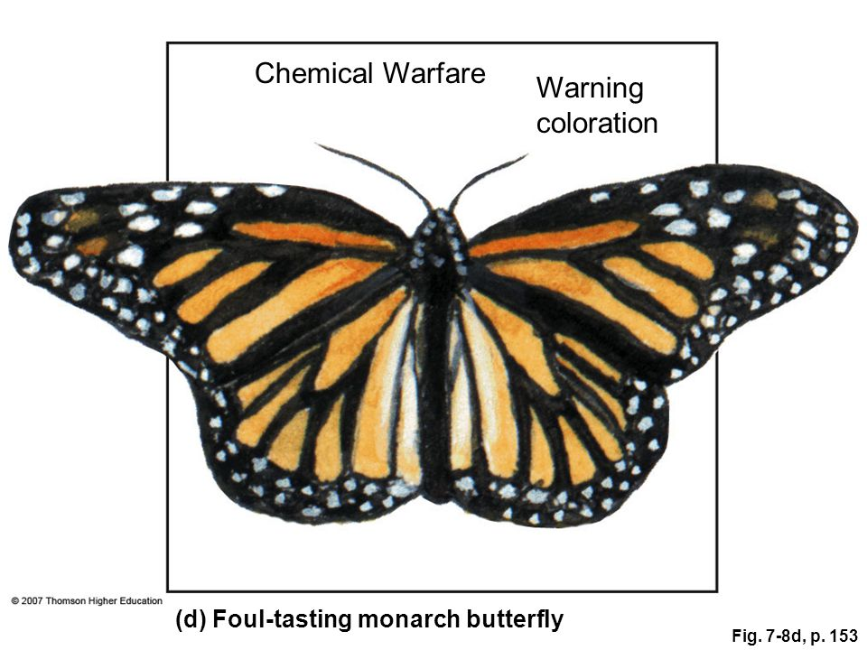 Fig. 7-8d, p. 153 (d) Foul-tasting monarch butterfly Chemical Warfare Warning coloration