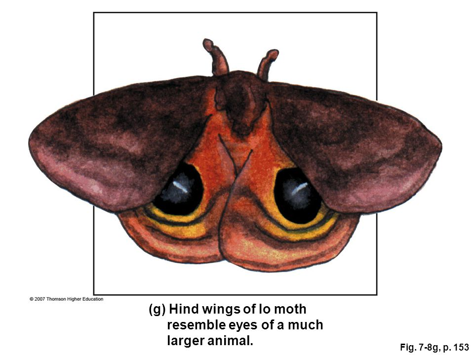 Fig. 7-8g, p. 153 (g) Hind wings of Io moth resemble eyes of a much larger animal.